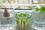 How To Re-Grow Vegetables From Kitchen Scraps?