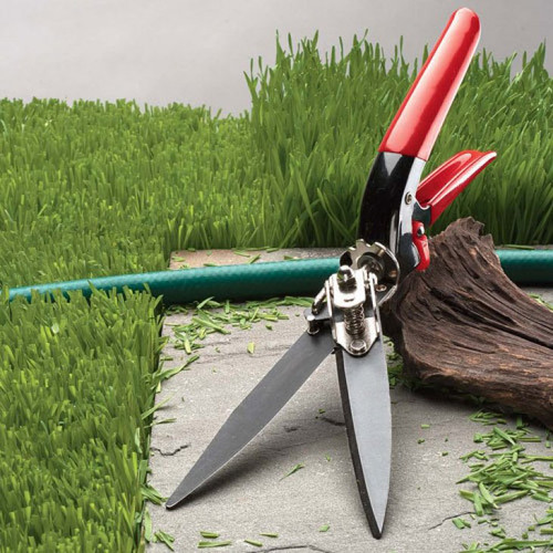 Grass Trimming Shears