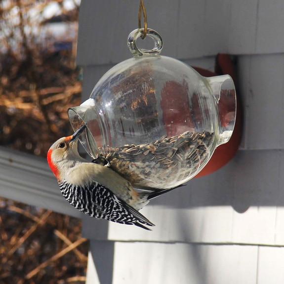 Large Glass Bird Feeder