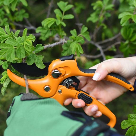 Ultimate Pruning Set