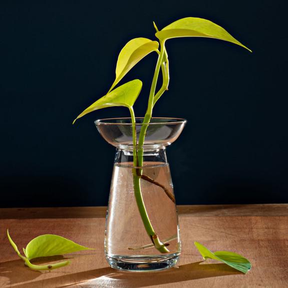 Small Aquaculture Vase
