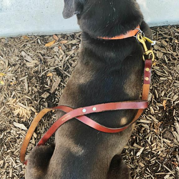 USA Made Leather Dog Leashes