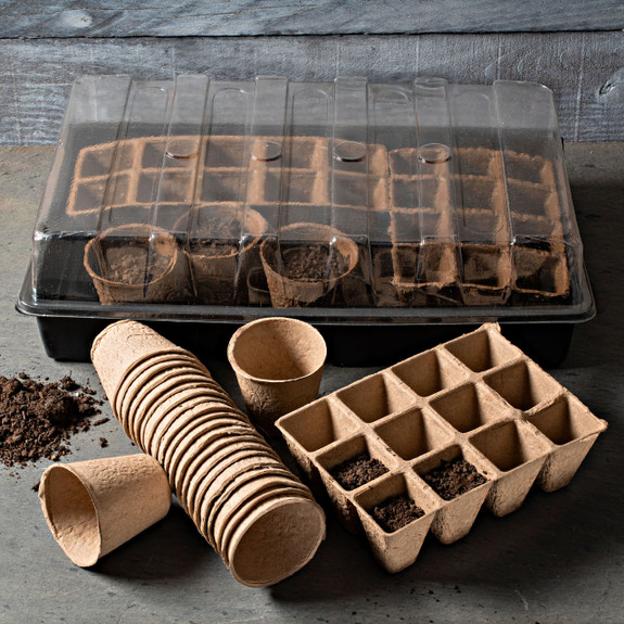 Paper Cup Seed Starter