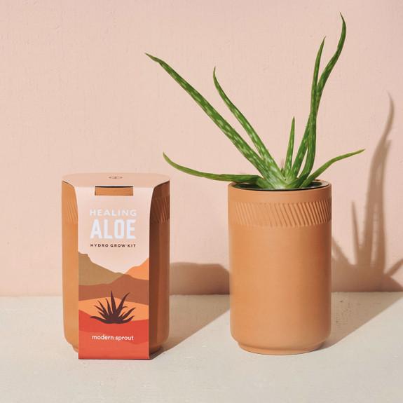 Aloe Terracotta Kit