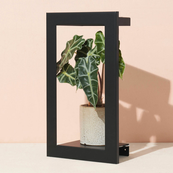 Portrait Grow Frames