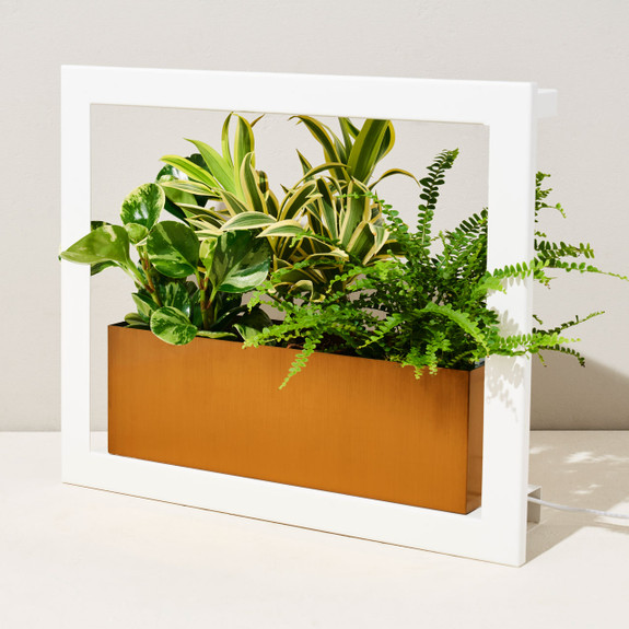 White Standard Grow Frame
