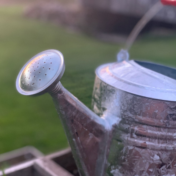 Galvanized Watering Can with Wooden Handle