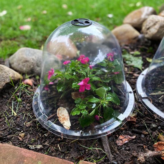 Affordable Garden Cloches - Extend the Season