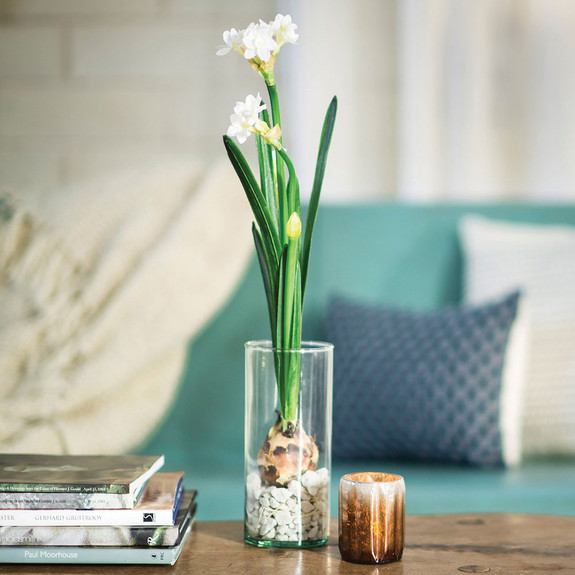 Paperwhite Bulb Kit