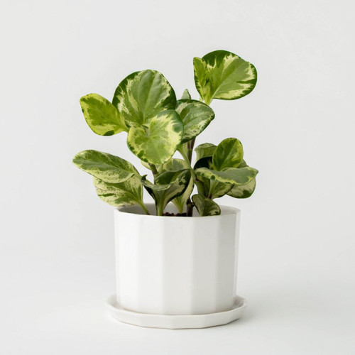 Ivory Riveted Tabletop Planter