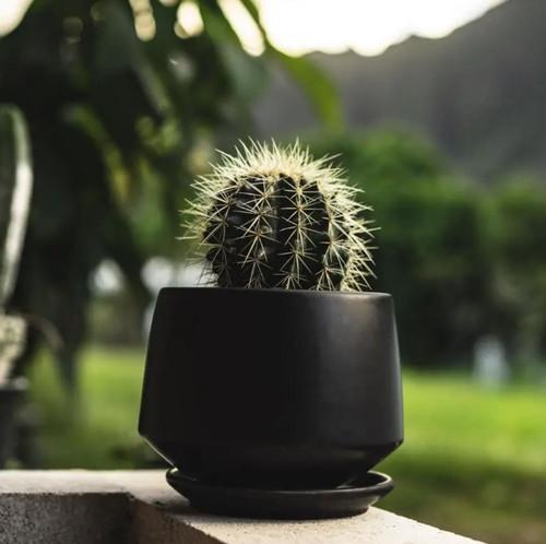 5 Inch Matte Black Porcelain Planter with Saucer
