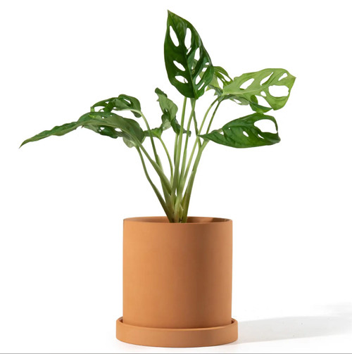 4.5 Inch Terracotta Cylinder Planter with Saucer