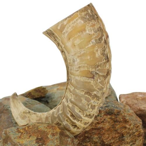 Natural Decorative Ram Horn Paperweight