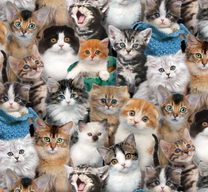 Elizabeth Studio - Cat Breeds - Packed Cats, Multi