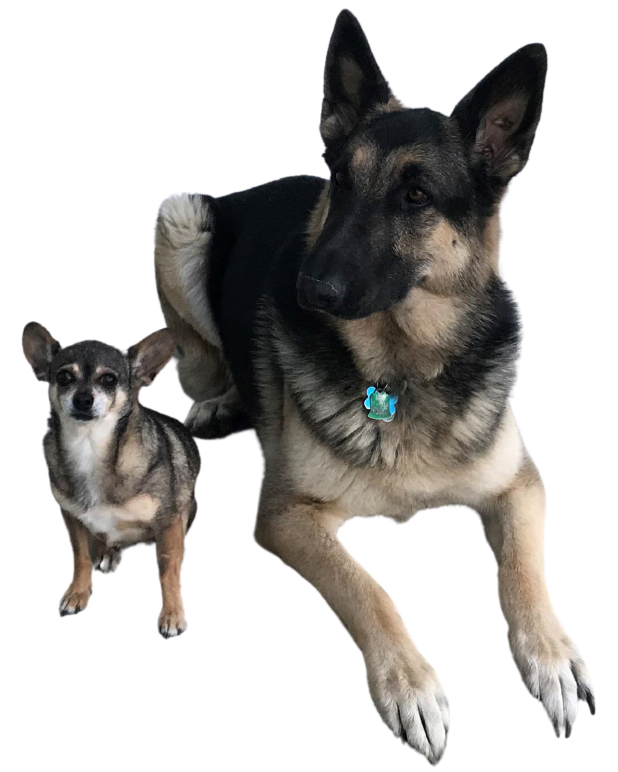 Bailey and Nala, Achieve Equine Staff