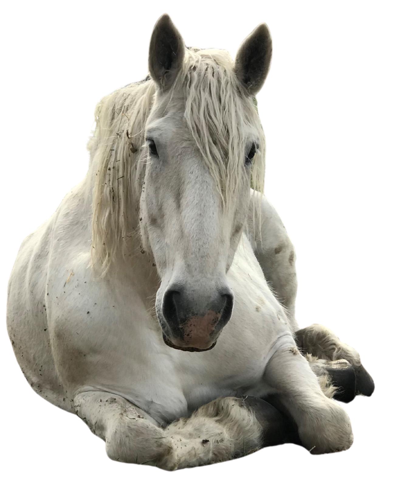 Boo, Achieve Equine Staff