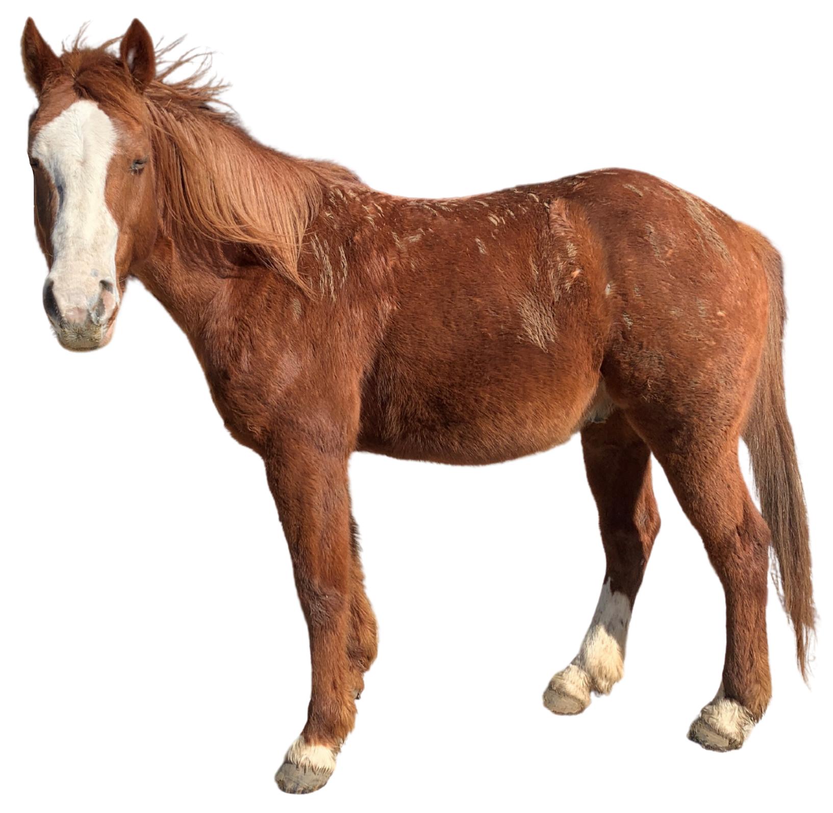 Gunner, Achieve Equine Staff