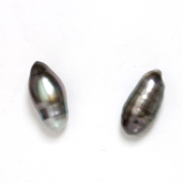 Tahitian Keshi Pearl Stick Stud Earrings 11.5 MM Black AAA