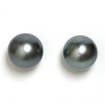 Tahitian Pearl Stud Earrings 10 MM AAA Flawless
