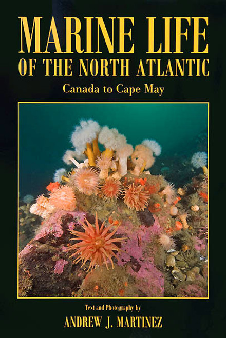 Marine Life of the North Atlantic
