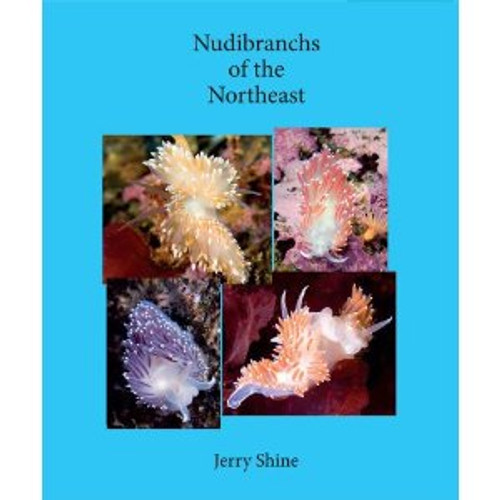Nudibranchs of the Northeast