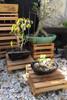 create your own bonsai garden