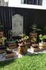 a beautiful bonsai garden