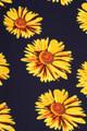 Buttery Soft Summer Daisy Maxi Skirt