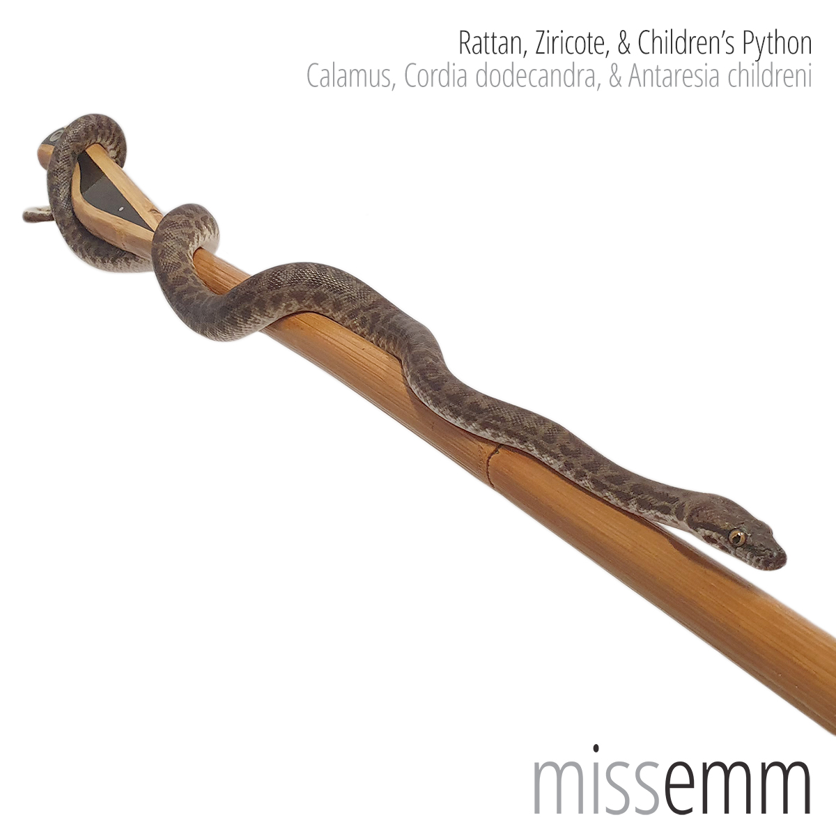 Rattan and Ziricote cane by Australian fetish toy maker Miss Emm