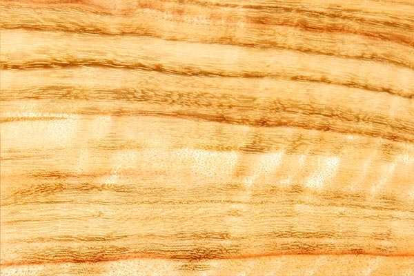 wood-sample-camphor-laurel-600x400.jpg