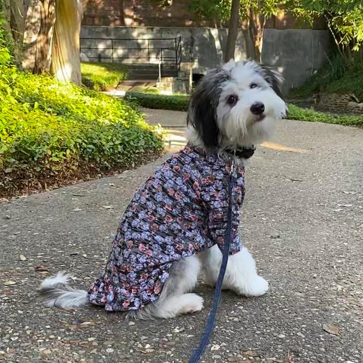 Blue Floral Waffle Knit Dress
