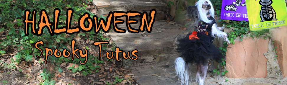 halloween-tutu-chinese-crested-copy.jpg