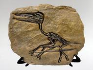 Fossil Replica