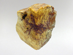 Fossil Wood - Decorative 6