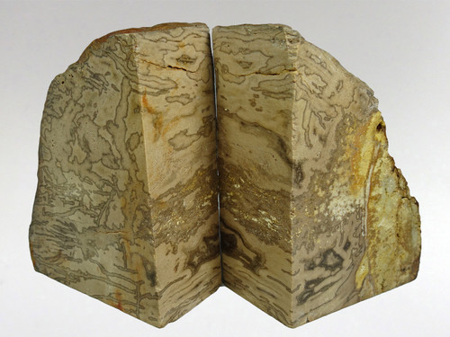 Fossil Wood - Bookend 2