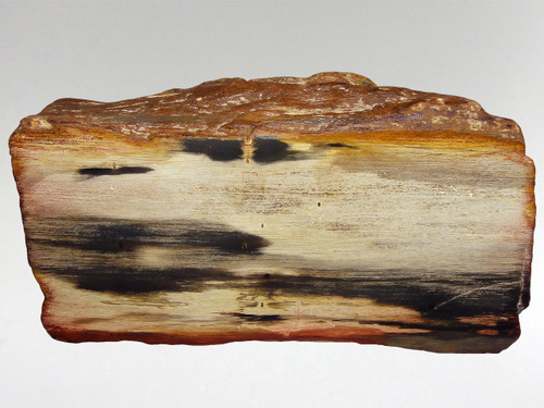 Fossil Wood - Decorative 11