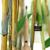 Bamboo Sonic Tooth Brush by Luxury Brio™