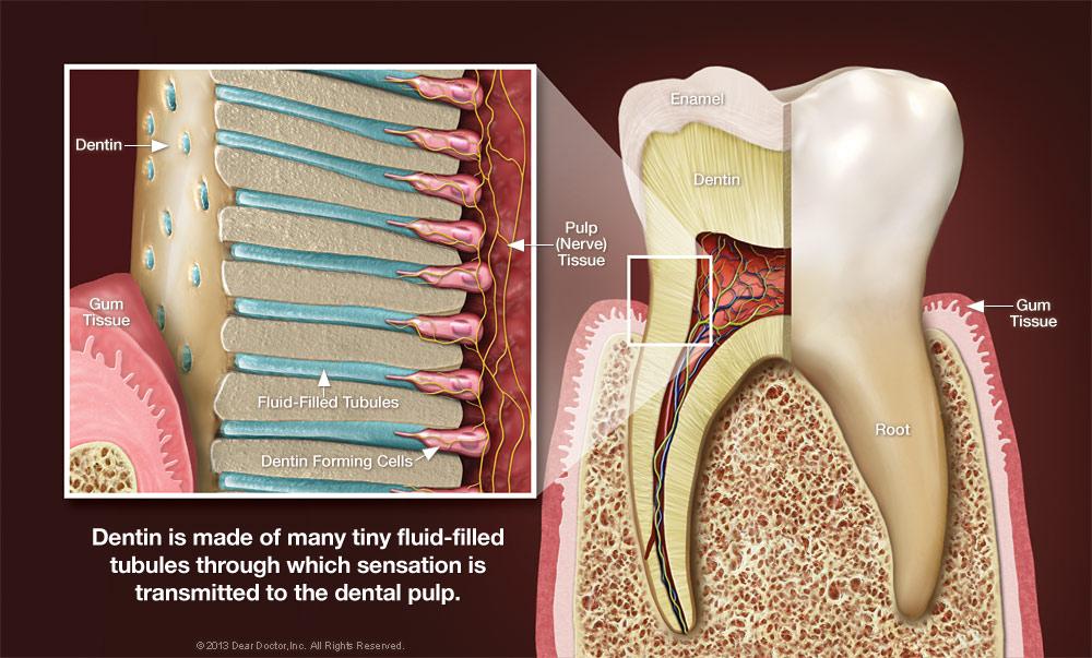 dentin-sensitive-teeth.jpg