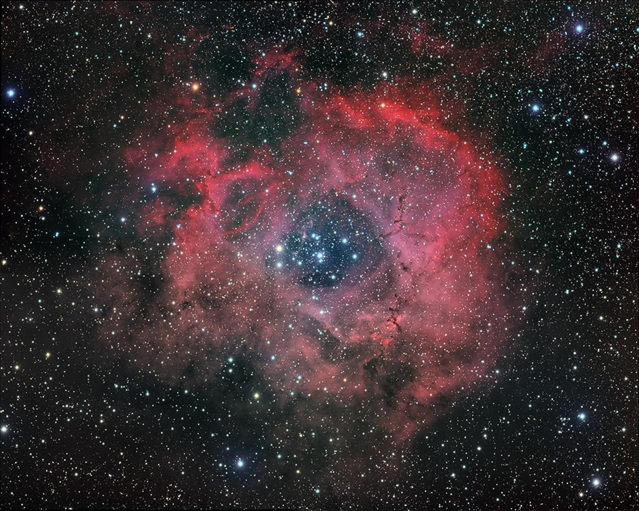 Rosette Nebula, Douglas Lalla