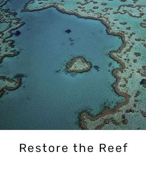 restore-the-reef.jpg