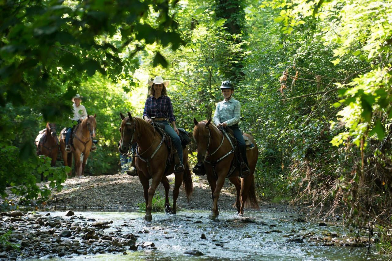 Western Saddles and Tack