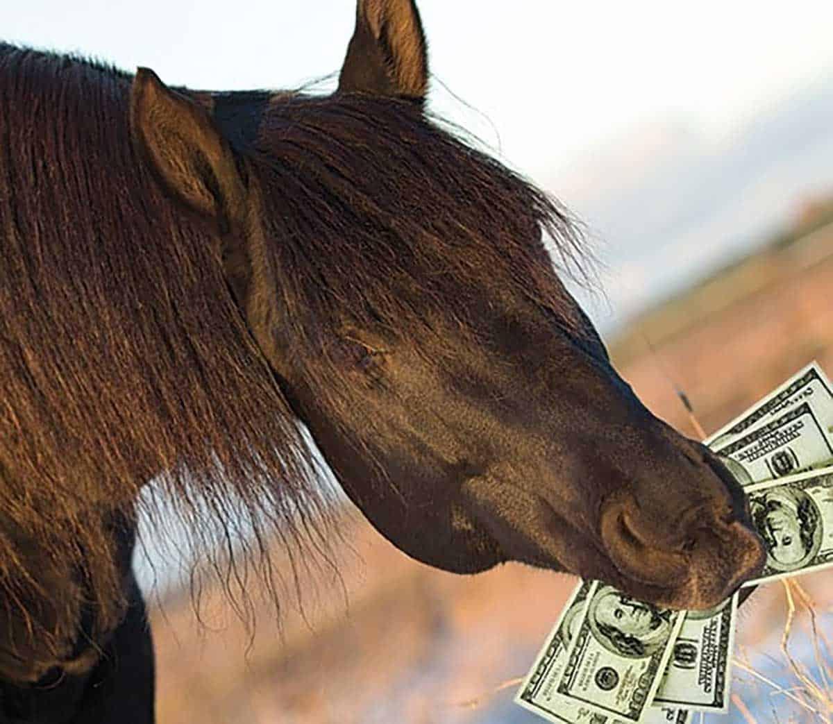 moneyhorse-1.jpg