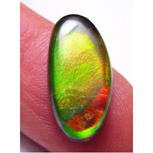 Ammolite Oval Loose Stone High Dome 7LS