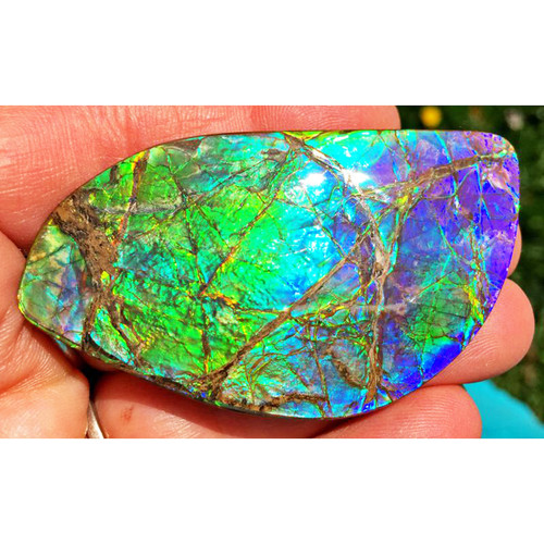 Ammolite Imperial Double Sided Loose Stone 6IMLS