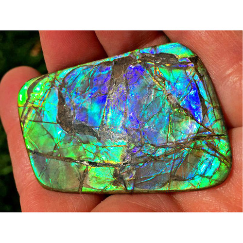 Ammolite Imperial Double Sided Loose Stone 7IMLS