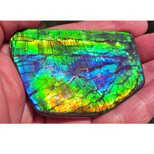 Ammolite Large Polished Hand Specimen 14LHPLS