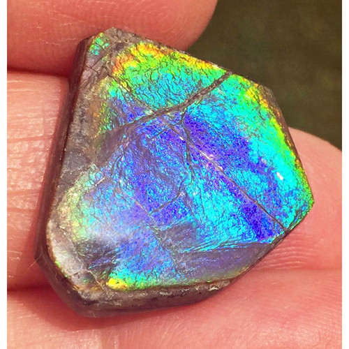 Ammolite Natural Polished Loose Stone Freeform 5HPLS
