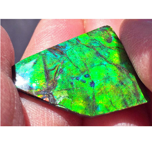 Ammolite Natural Polished Loose Stone Freeform 27HPLS