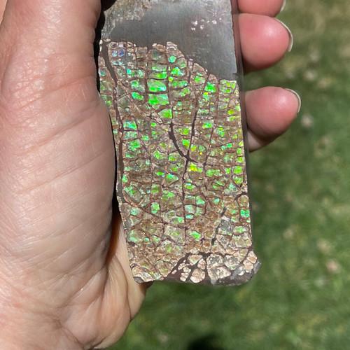 Ammolite Hand Specimen Piece