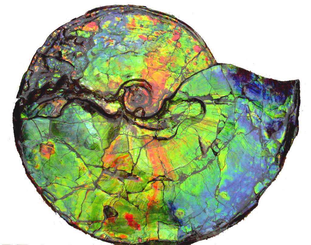 22-inch-gem-fossil-b-p8ax1.jpg
